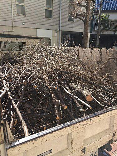 桜の木の剪定
