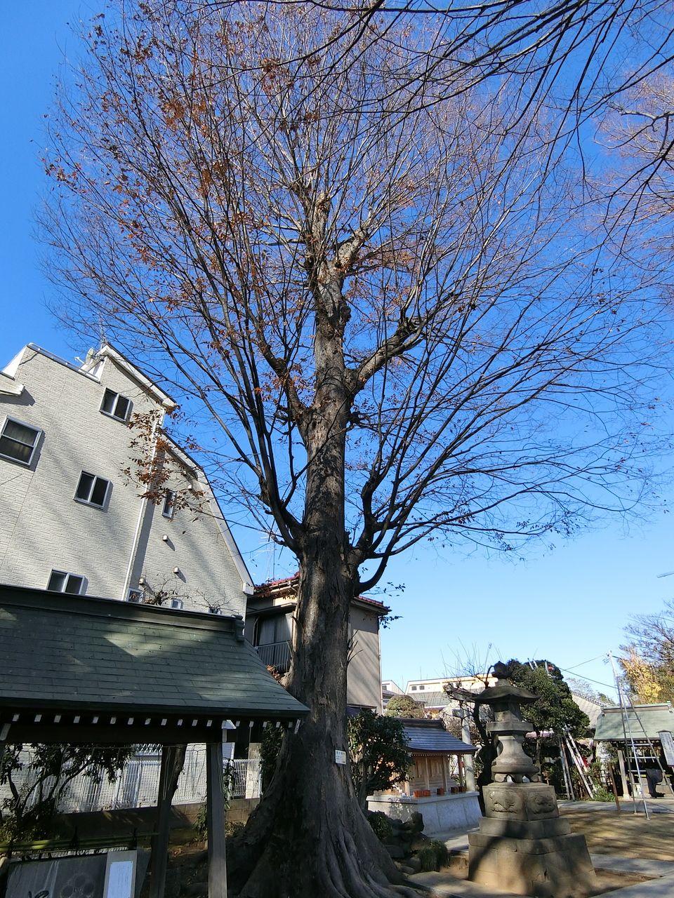 徳丸北野神社の保存樹