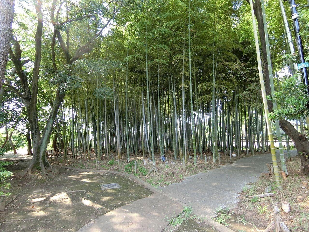 板橋区大門の竹の子公園