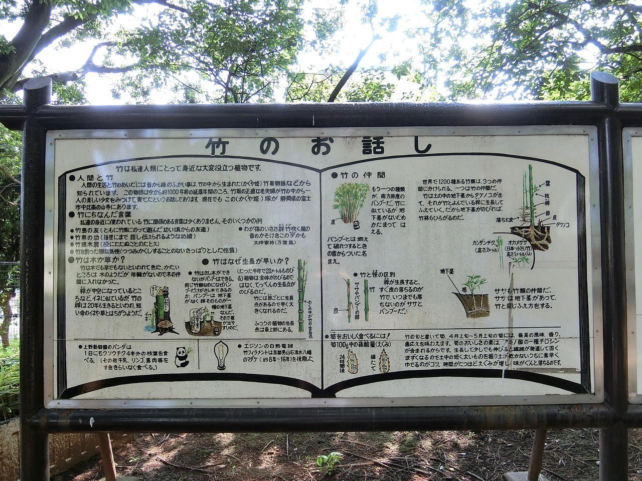 竹のお話し