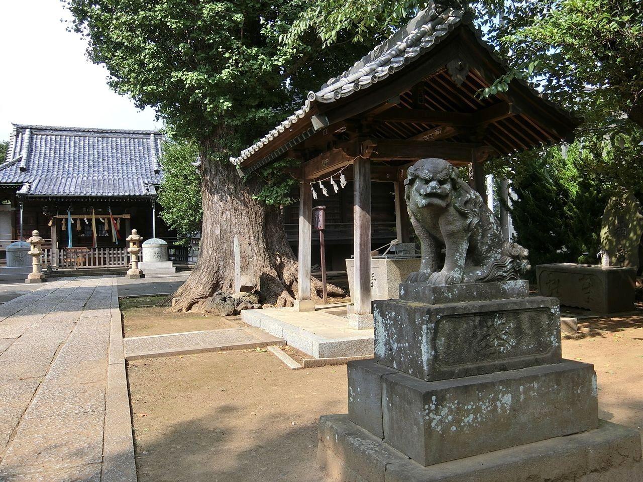 赤塚諏訪神社(板橋区大門)の狛犬