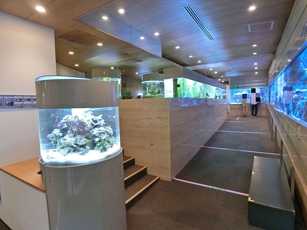 ねったいかんのミニ水族館